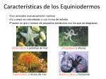 caracter sticas de los equiniodermos