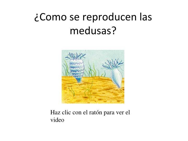 Ppt reino animal powerpoint presentation id 785065 - Como se alimentan las medusas ...
