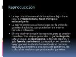 reproducci n1