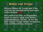 bilder von triops