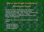 gibt es von triops verschiedene notostraca arten