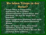 wo leben triops in der natur