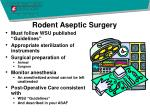 rodent aseptic surgery