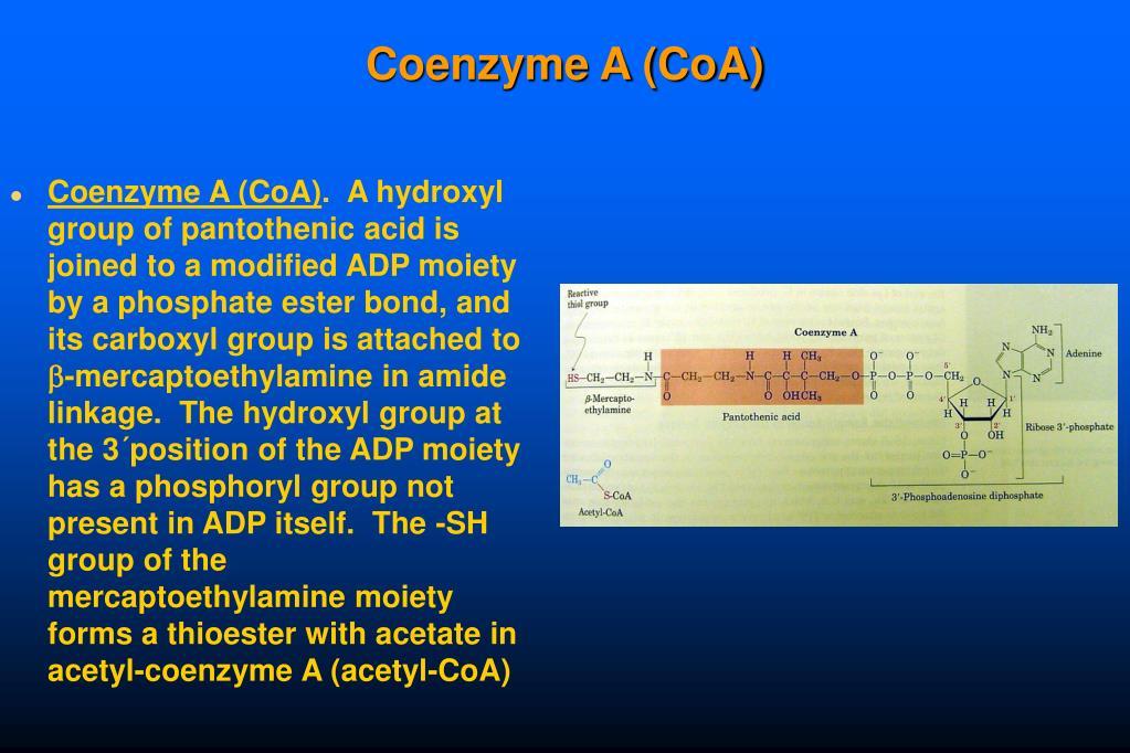 Coenzyme A (CoA)