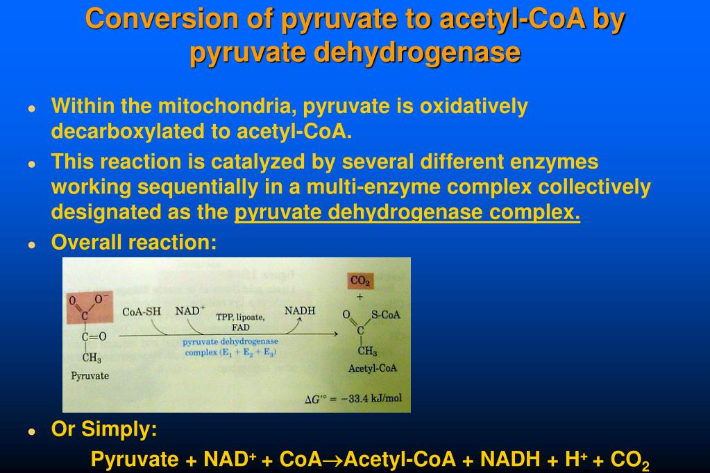 Conversion of pyruvate to acetyl-CoA by pyruvate dehydrogenase