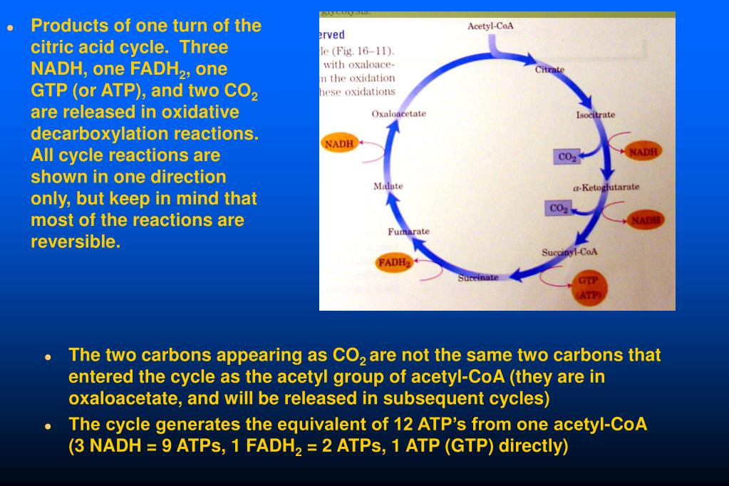 Products of one turn of the citric acid cycle.  Three NADH, one FADH