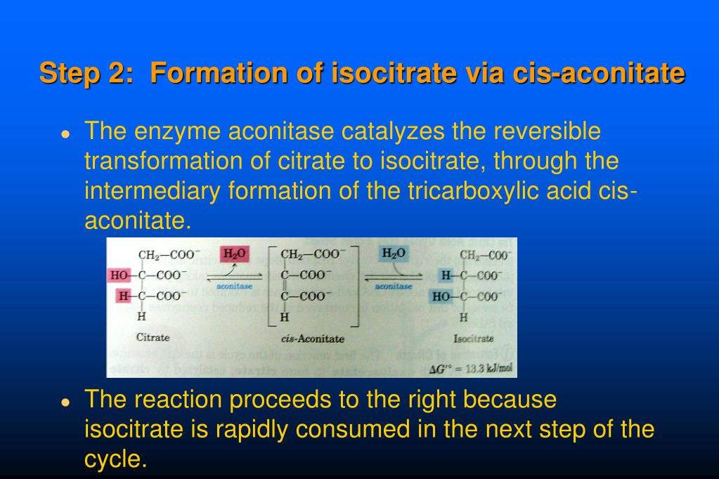 Step 2:  Formation of isocitrate via cis-aconitate