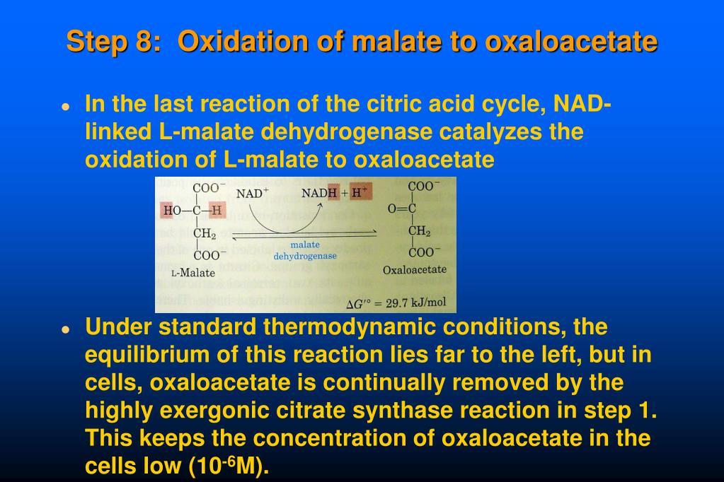 Step 8:  Oxidation of malate to oxaloacetate