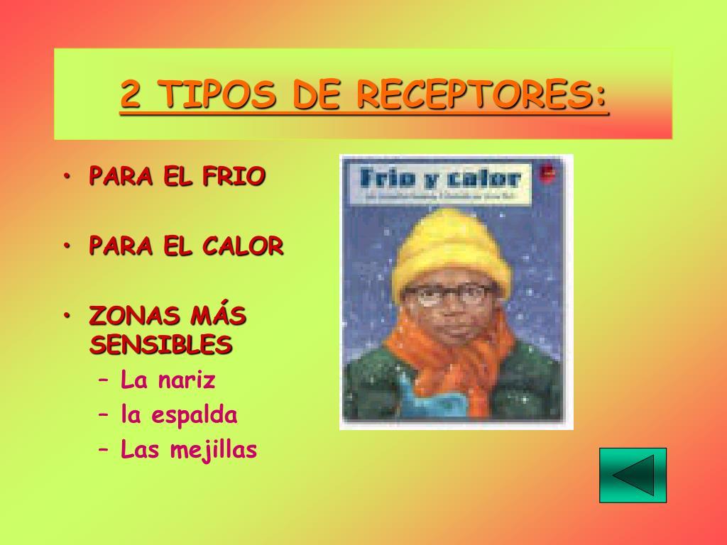 2 TIPOS DE RECEPTORES:
