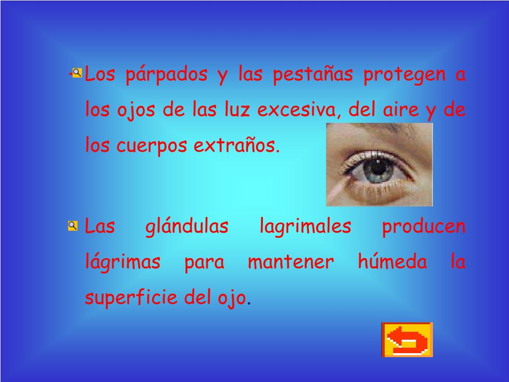 Los párpados y las pestañas protegen a los ojos de las luz excesiva, del aire y de los cuerpos extraños.