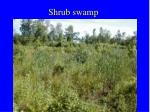 shrub swamp