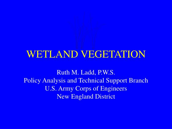 wetland vegetation n.