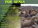 fur seals17
