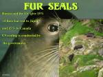 fur seals18