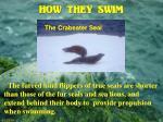 how they swim