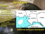 sea lion24