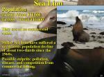 sea lion25