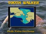 tooth walker31