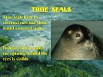 true seals7