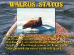walrus status