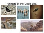 animals of the dead sea