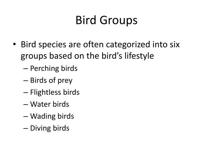 Bird groups