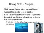 diving birds penguins