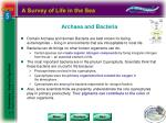 archaea and bacteria