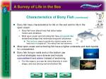 characteristics of bony fish continued