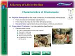 characteristics of crustaceans