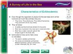 characteristics of echinoderms