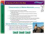 characteristics of marine mammals continued