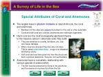special attributes of coral and anemones
