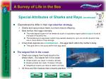 special attributes of sharks and rays continued1