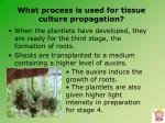 what process is used for tissue culture propagation18