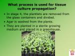what process is used for tissue culture propagation19