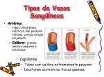 tipos de vasos sang neos