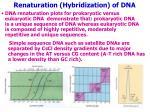 renaturation hybridization of dna