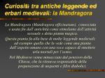 curiosit tra antiche leggende ed erbari medievali la mandragora