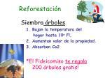 reforestaci n