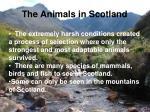 the animals in scotland