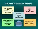 sources of coliform bacteria