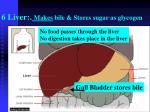 6 liver makes bile stores sugar as glycogen