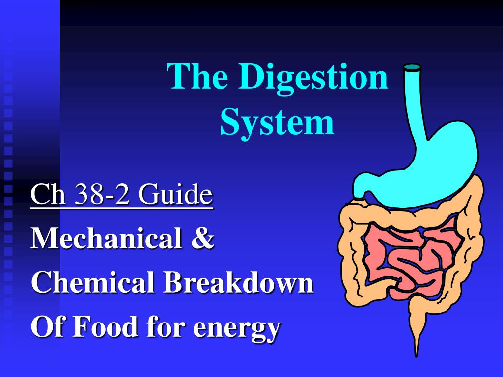 the digestion system l.