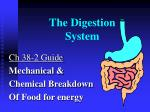 the digestion system