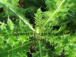 but what if the garden gets overrun