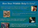how does wildlife help us live