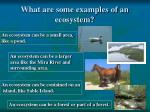 what are some examples of an ecosystem