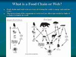 what is a food chain or web