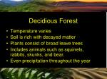 decidious forest